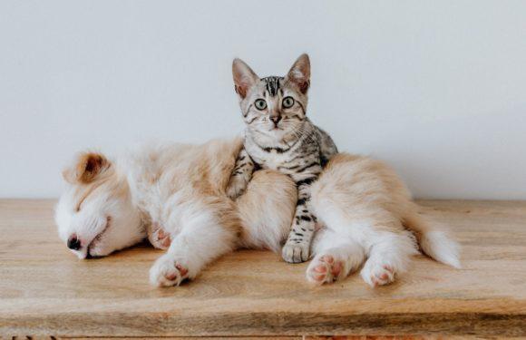 Tiendas de animales en Majadahonda: ¿cuál es la mejor?